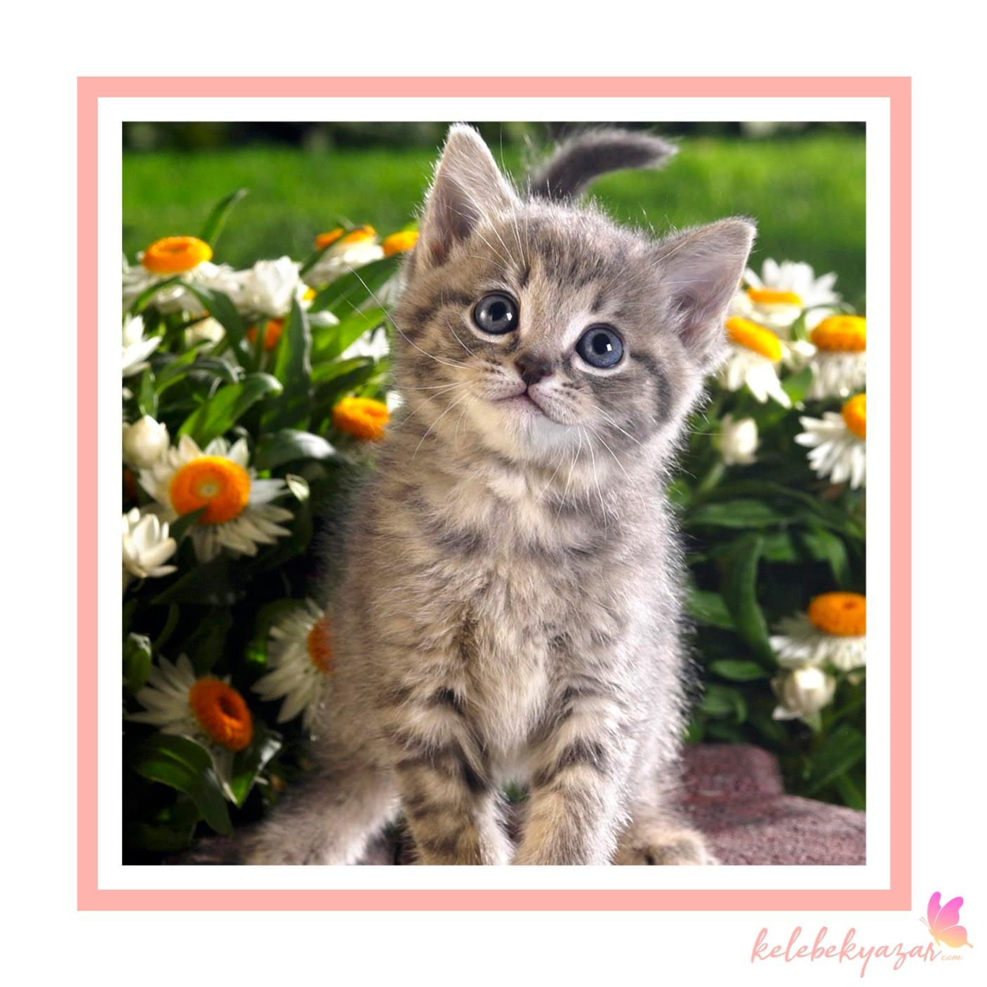 Kedi Cinsleri Nelerdir?